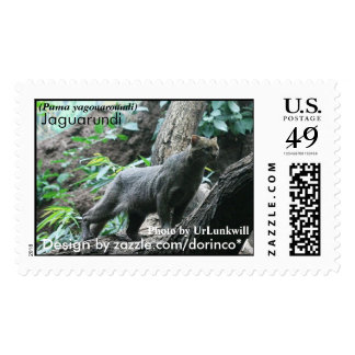 Jaguarundi (Puma yagouaroundi) 1 Postage