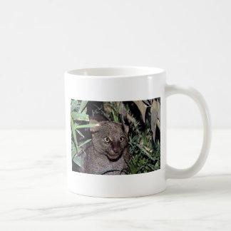 Jaguarundi (yagouaroundi del Felis) Tazas