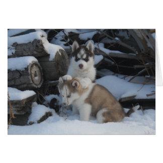 Jaida y Zayda que ocultan en el woodpile Felicitaciones