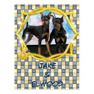 Jake & Elwood - Min Pin Postcard