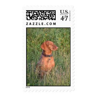 Jake Hunting Postage Stamp