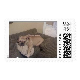 Jake Postage Stamp