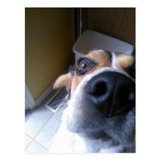 Jake the dog postcard