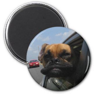 Jake the Puggle Fridge Magnet