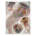 Jaleas (medusas) en colores en colores pastel tarjetas postales