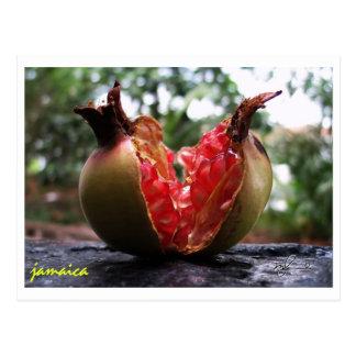 Jamaica Pranganott Postcard