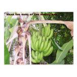 Jamaican Banana Man Postcard