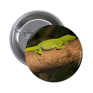 Jamaican giant anole button