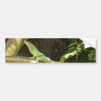 Jamaican Green Lizard Bumper Sticker