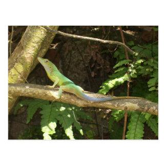 Jamaican Green Lizard Postcard