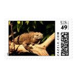 Jamaican Iguana, Cyclura collei  (Endangered) Postage