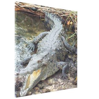 Jamaican Salt Water Crocodile Canvas Print