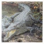 Jamaican Salt Water Crocodile Ceramic Tile