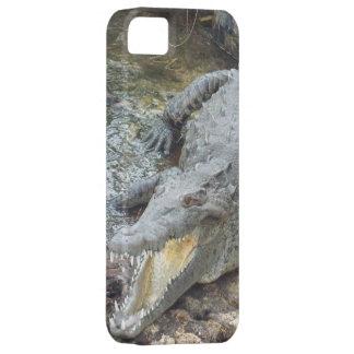 Jamaican Salt Water Crocodile iPhone 5 Case