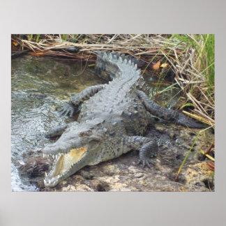 Jamaican Salt Water Crocodile Print