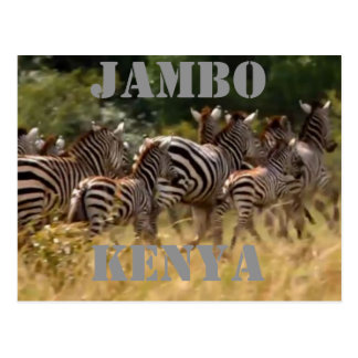 Jambo Kenya Zebra Migration Safari Postcards