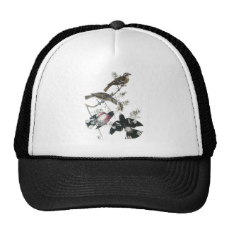 James Aubudon Rose-breasted Grosbeak Mesh Hat