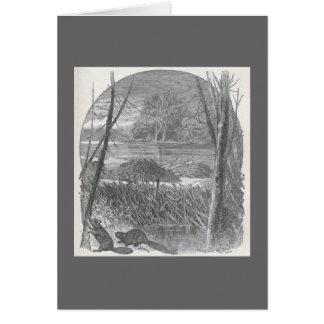 James Johonnot - Beavers and Dam Card