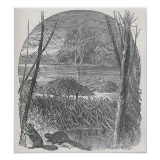 James Johonnot - Beavers and Dam Poster