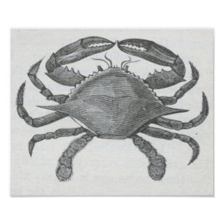 James Johonnot - Edible Crab Poster