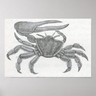 James Johonnot - Fiddler Crab Portfolio Poster