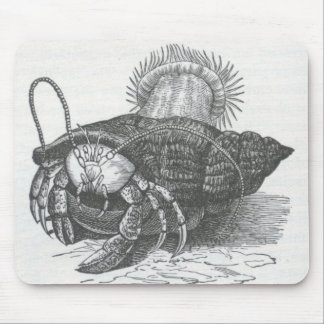 James Johonnot - Hermit Crab Mouse Pad