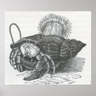 James Johonnot - Hermit Crab Poster