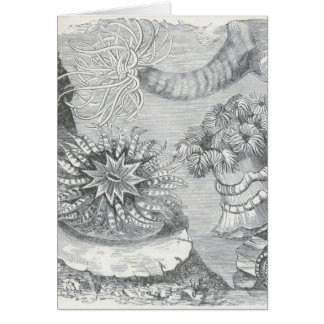 James Johonnot - Sea Anemones Card