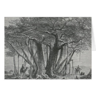 James Johonnot - The Banyan Tree Card