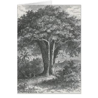 James Johonnot - The Baobab Tree Card