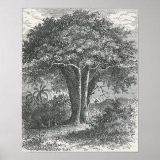 James Johonnot - The Baobab Tree Poster