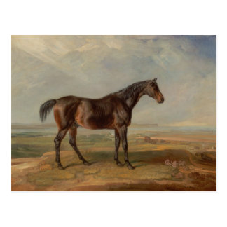 James Ward - Dr. Syntax, a Bay Racehorse Postcard