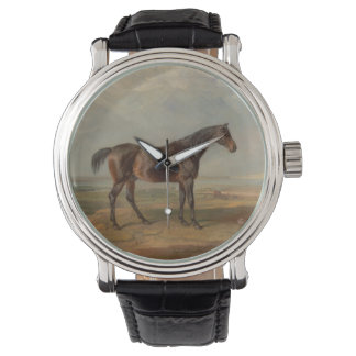 James Ward - Dr. Syntax, a Bay Racehorse Watches