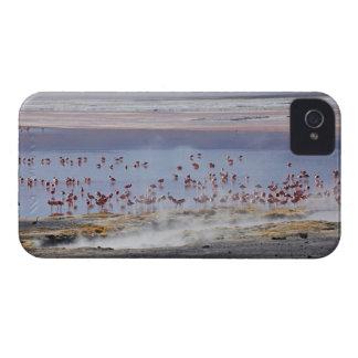 James's Flamingo, Phoenicoparrus jamesi iPhone 4 Cover
