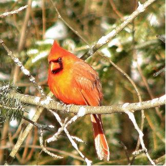 Jan_22_2007_WOW_Close_Up_Male_Cardinal_Side_Of_Hou Cutout