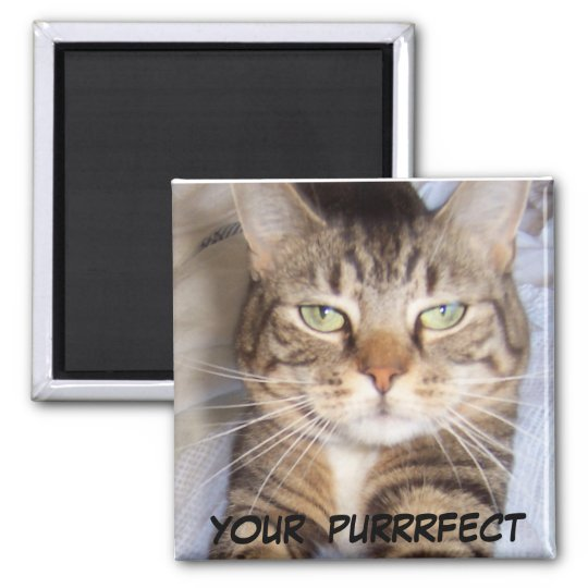 Jane says..YOUR PURRFECT Magnet
