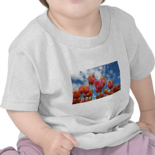 Janesville, Wisconsin Camisetas