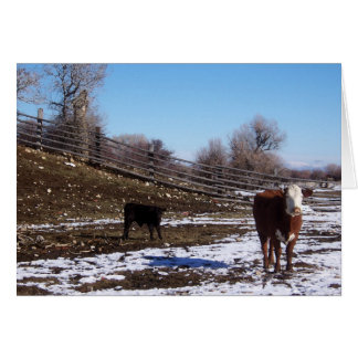 January Calf and Cow on the Hillside Card