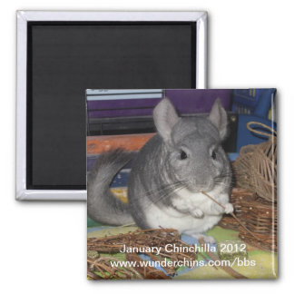 January chinchilla 2012 magnet