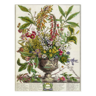 January, from `Twelve Months of Flowers' Postcard