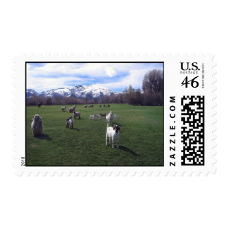 January Goats and Ruby Mountains Postage
