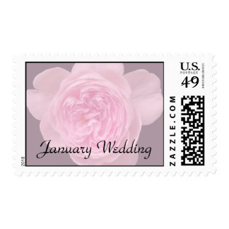 January Rose Stamp