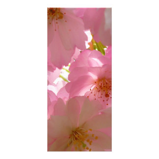 Japan Cherry Flowers Rack Card