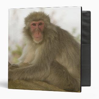 Japan, Honshu island, Kyoto, Arashiyama Monkey Binder