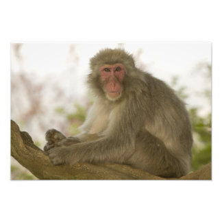 Japan, Honshu island, Kyoto, Arashiyama Monkey Photo Print