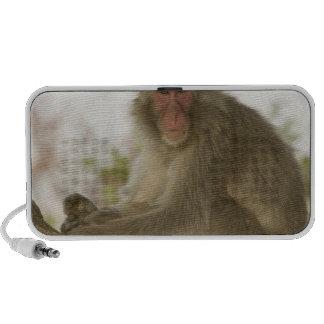 Japan, Honshu island, Kyoto, Arashiyama Monkey PC Speakers