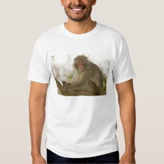 Japan, Honshu island, Kyoto, Arashiyama Monkey T Shirt