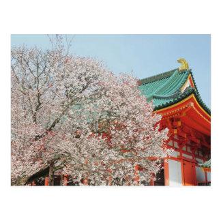 Japan, Kyoto. Cherry blossom of Shinto Postcard