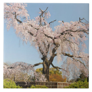 Japan, Kyoto. Weeping cherry tree under blue sky Ceramic Tile