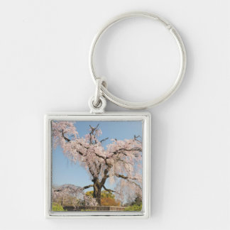 Japan, Kyoto. Weeping cherry tree under blue sky Keychains